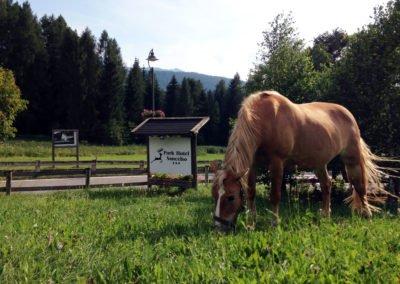 hotel-dolomiti-cavalli